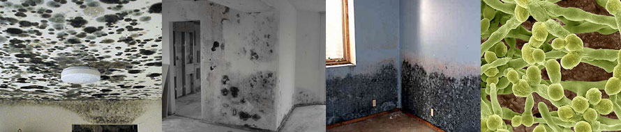 Toxic Mold | Mold Lawyer – The Law Offices of John S